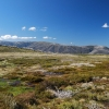 The Bogong High Plains in early summer. This photo was taken not far from Mt Bundara.