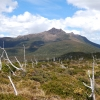 Pindars Peak from the south. The dead trees are left over from a massive bush fire from decades ago. The whole trip is fuel stove only - apart from a few designated campfires at some of the campsites along the coast.